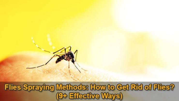 flies-spraying-methods
