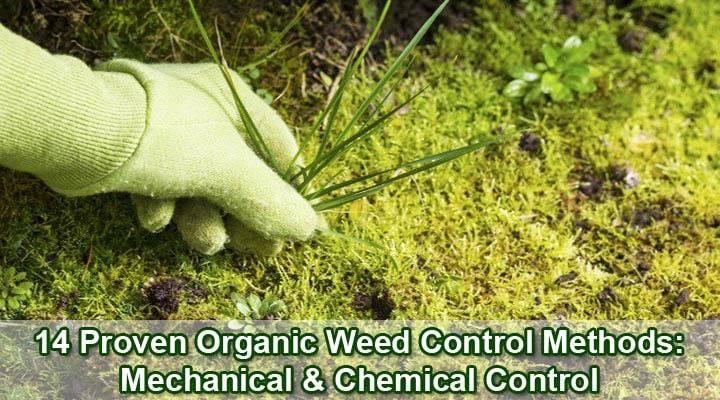 organic-weed-control-methods