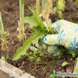 weed-control-methods