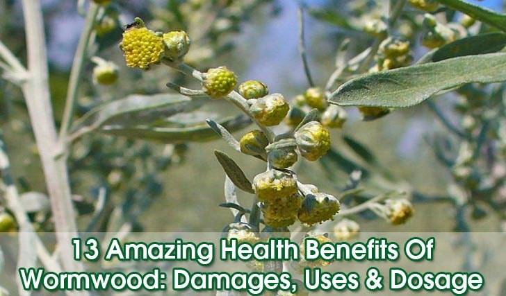Wormwood-benefits