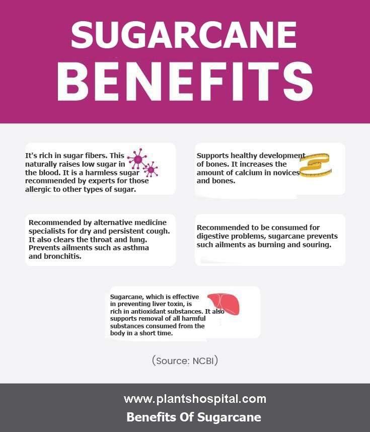 sugarcane-graphic