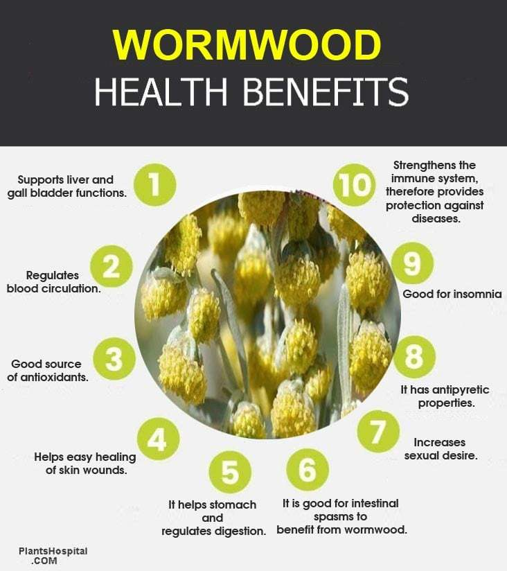 wormwood-graphic
