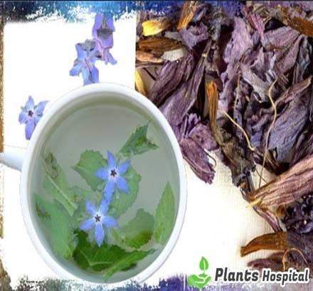 Borage-tea