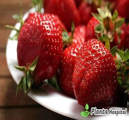 Eating-Strawberries-During-Pregnancy