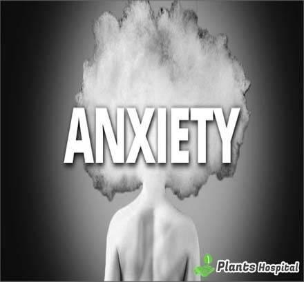 Top-10-Fruits-That-Can-Help-Lower-Your-Anxiety