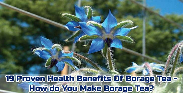 borage-tea-benefits