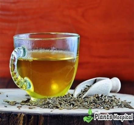 cumin-tea