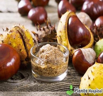 water-chestnut