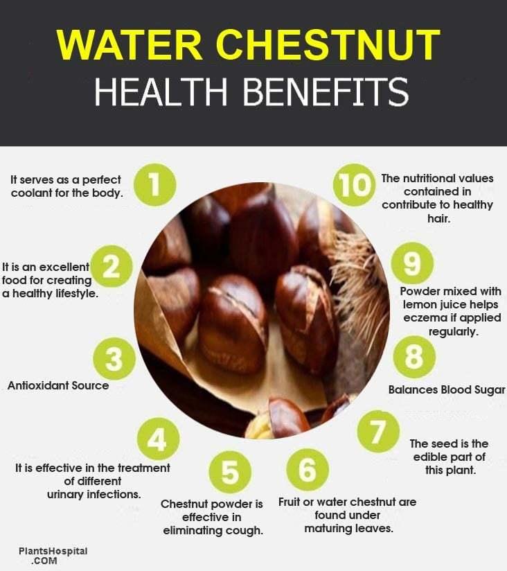 water-chestnut-graphic
