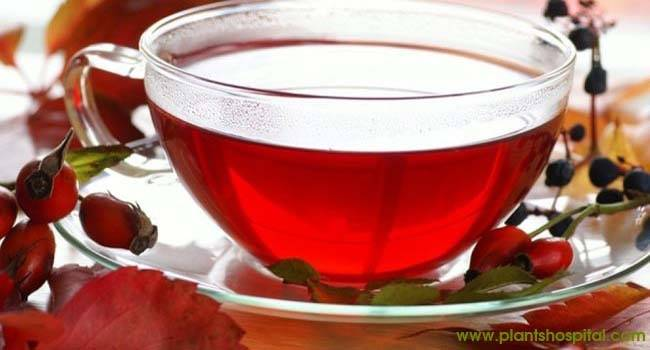 Rosehip-Tea
