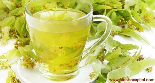 linden-tea