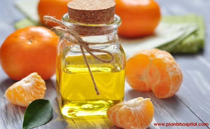 mandarin-essential-oil-benefits