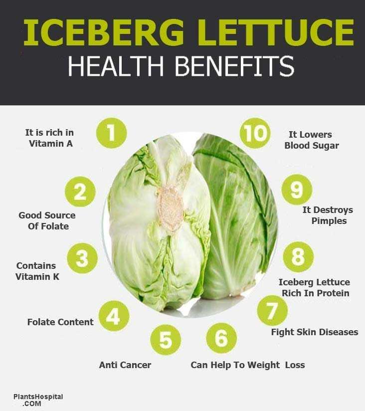 iceberg-lettuce-graphic