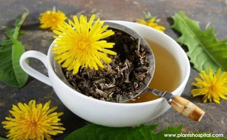 Dandelion-tea-benefits
