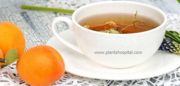 apricot-tea-benefits