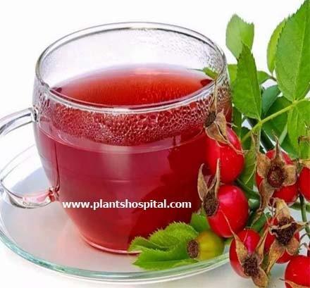 hawthorn-tea