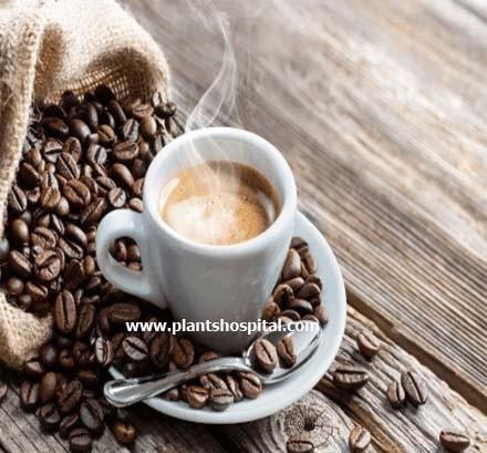 nescafe-coffee