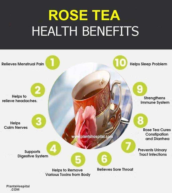 rose-tea-graphic