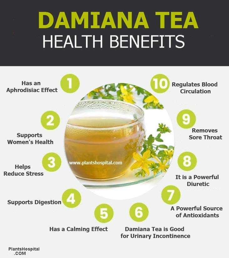damiana-tea-graphic