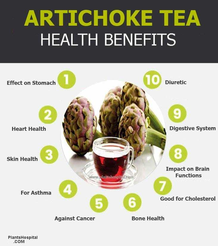 artichoke-tea-graphic