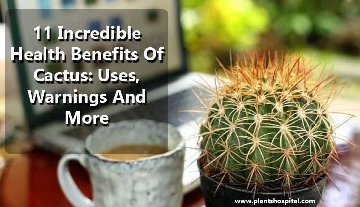 cactus-benefits