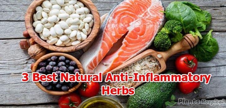 Best-Natural-Anti-Inflammatory-herbs