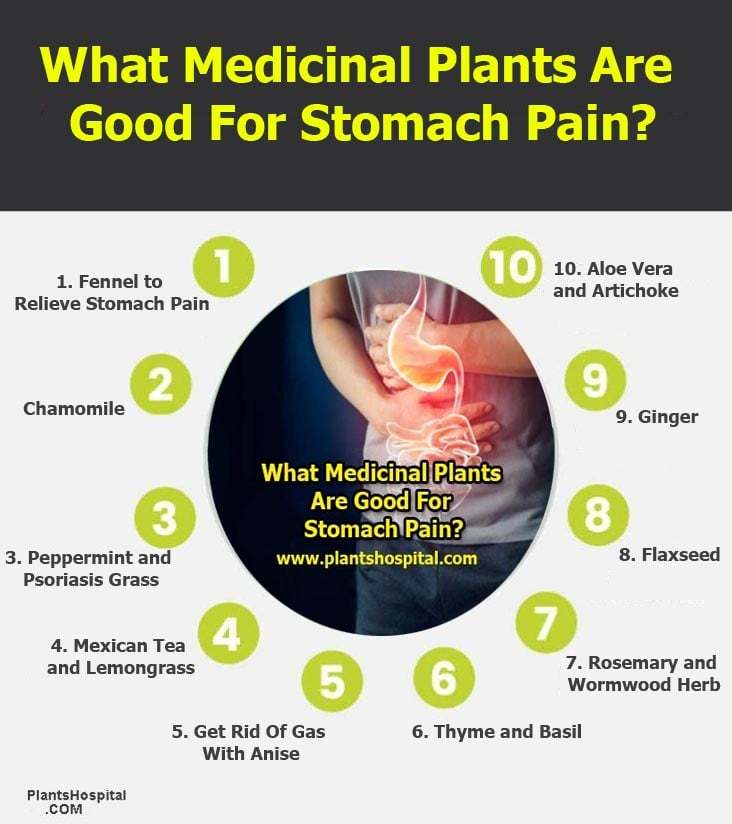 What-Medicinal-Plants-Are-Good-For-Stomach-Pain-Graphic
