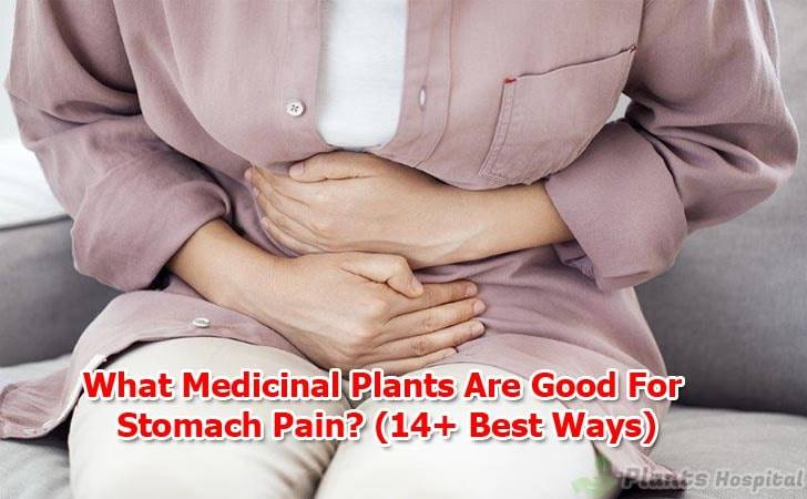 What-Medicinal-Plants-Are-Good-For-Stomach-Pain