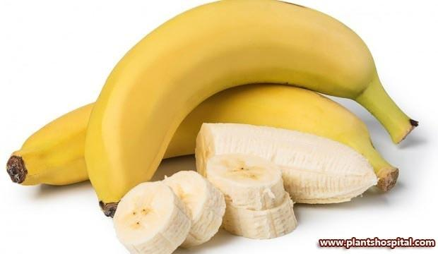 banana-for-brain-health