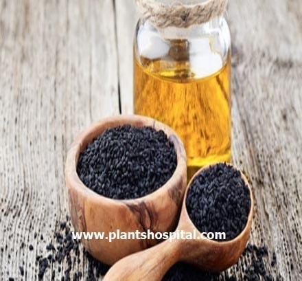 black-seed-oil