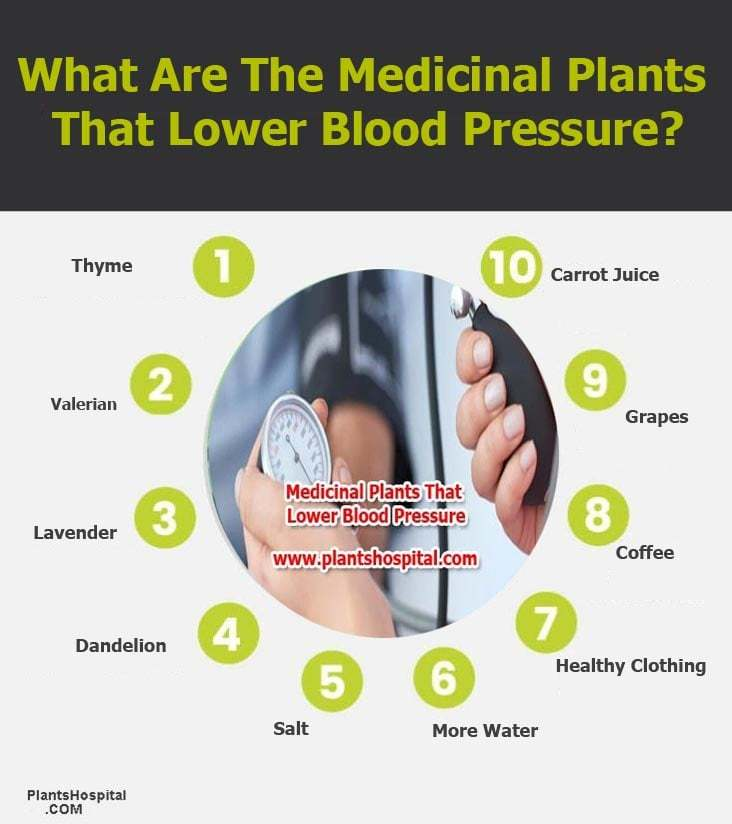 medicinal-plants-that-lower-blood-pressure-graphic
