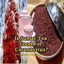 sumac-tea-benefits
