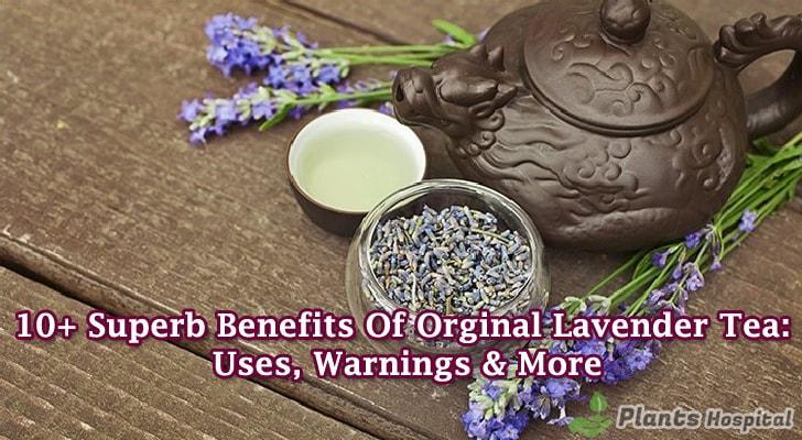 Lavender-tea-benefits