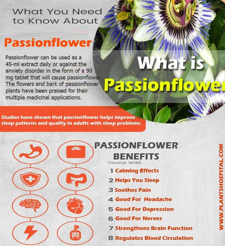 Passionflower-benefits-infographic