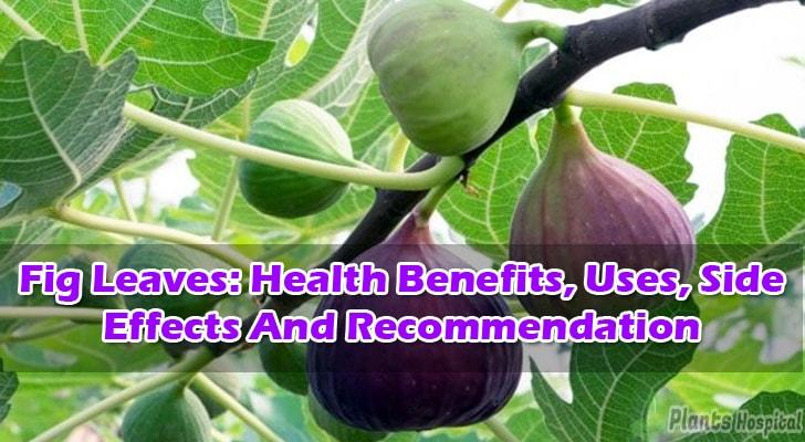 The fig leaves which is good for the digestive system and cancer