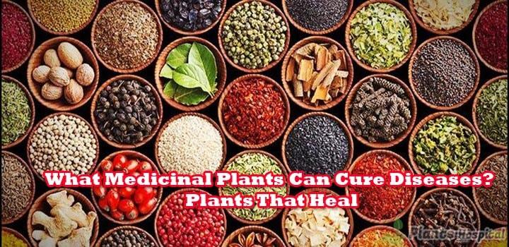 What-Medicinal-Plants-Can-Cure-Diseases