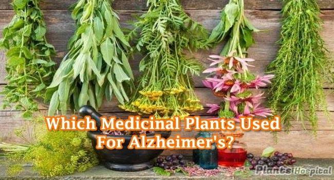 benefits-of-medicinal-plants