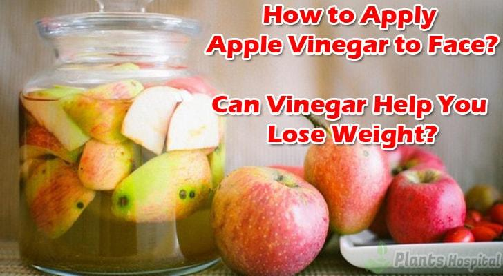 can-vinegar-help-you-lose-weight