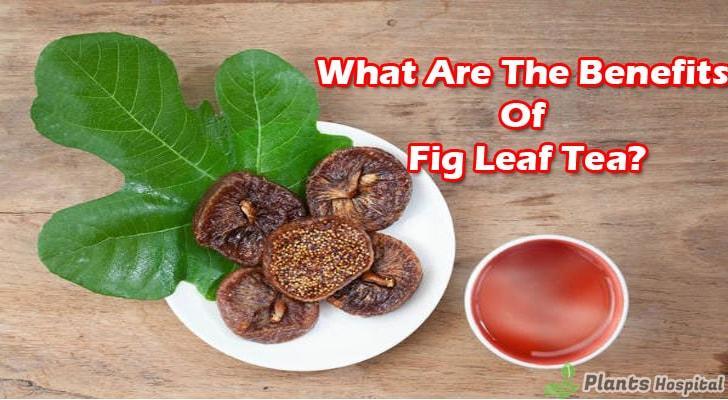 fig-leaf-tea-benefits