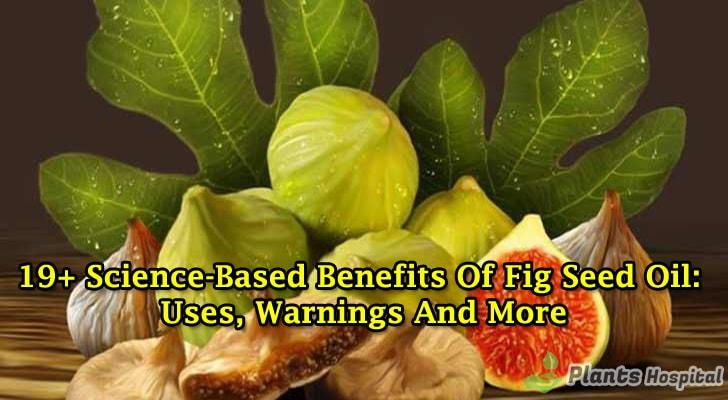fig-seed-oil-benefits