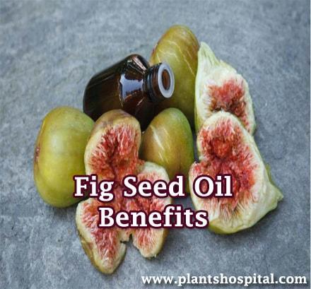 fig-seed-oil