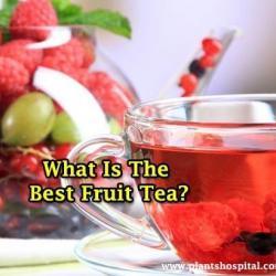 fruit-teas