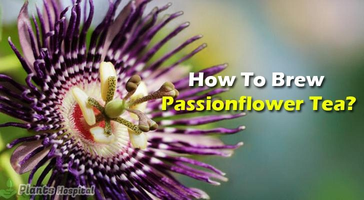 how-to-brew-passionflower-tea