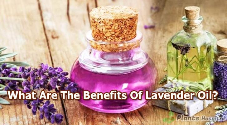lavender-oil-benefits