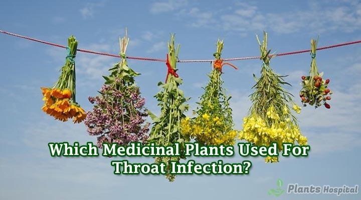 medicinal-plants-uses