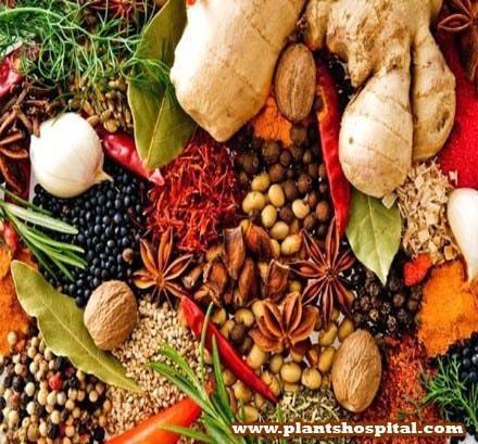 medicinal-plants