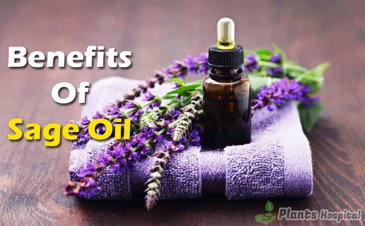 sage-oil-benefits