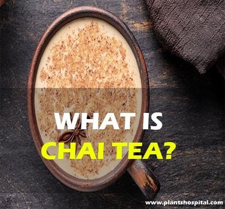 what-is-chai-tea