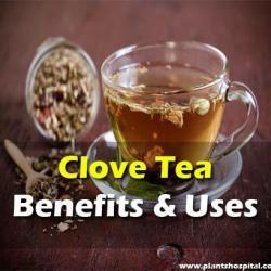 what-is-clove-tea