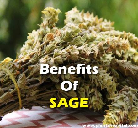 what-is-sage